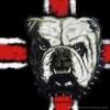 robydog